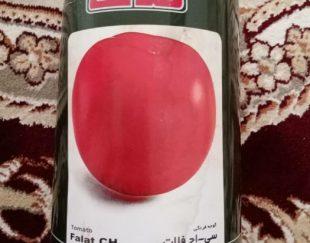 بذر اصلاح شده ی گوجه فرنگی  سی اچ