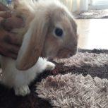 خرگوش لوپ خانگی با تمام وسایل