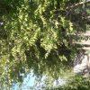 باغچه با دارو درخت ۱۱۰۰ متر خیابان دهکده ورزشی چهار باغ