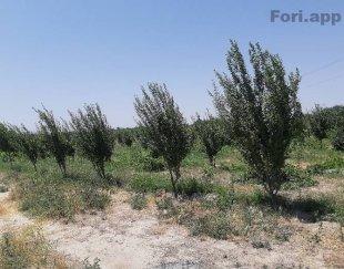 ۵۰۰متر باغ میوه درختان مثمر اب کشاورزی وکالت محضری