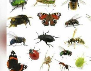سمپاشی حشرات سمپاشی تضمینی مجوز بهداشت