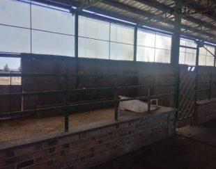 مزرعه پرورش شترمرغ فروشی
