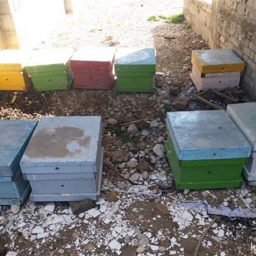فروش ۱۰ عدد کندوی عسل همراه با ۱۰۰ عدد پوکه