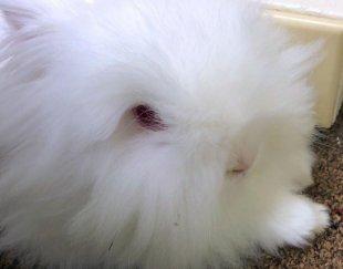 **خرگوش وودی توی **