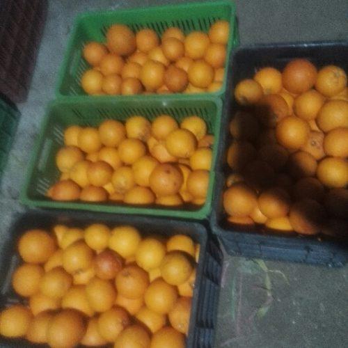 فروش پرتقال خونی فوق اعلا