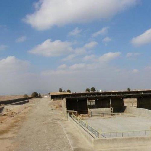 باغ و گاوداری صنعتی با ۱۰۵,۰۰۰ مترزمین
