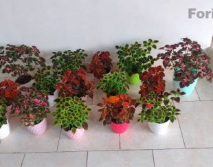 فروش گل
