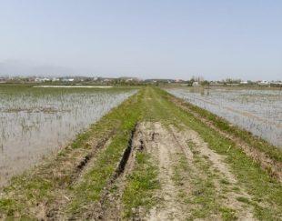 زمین ۵۰۰۰متری کشاورزی باسند وعبور ماشین رو