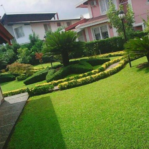 باغبانی گل و گیاه انزلی