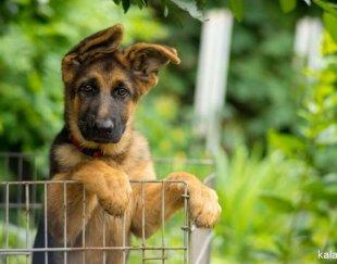 خرید فروش انواع سگ