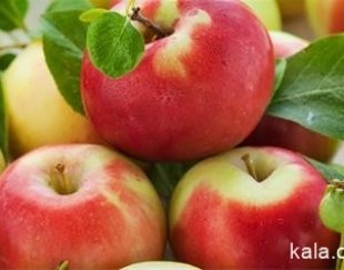 فروش نهال سیب جونا کولد