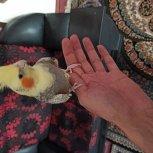 عروس دستی