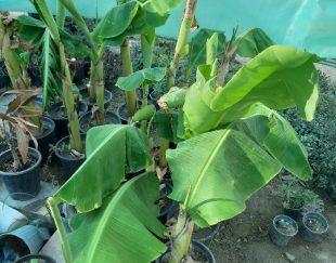 تولیدی گل و گیاه هانی