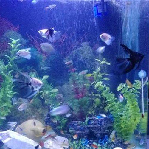 آکواریوم و ماهی
