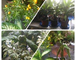 فروش تعداد محدودی گیاهان آپارتمانی
