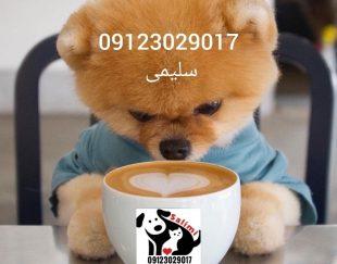 فروش سگ پامر