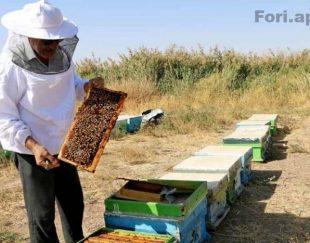 عسل طبیعی کوه های لرستان