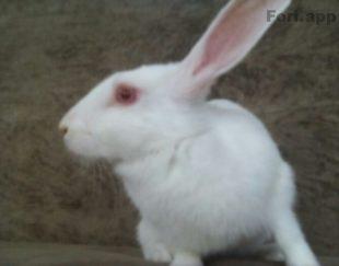 فروش خرگوش