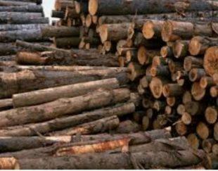 خریدار و برش چوب