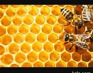 فروش عسل طبیعی وصددرصد ارگانیک