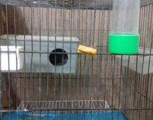 قفس پرنده دودرب باتمامی وسایل